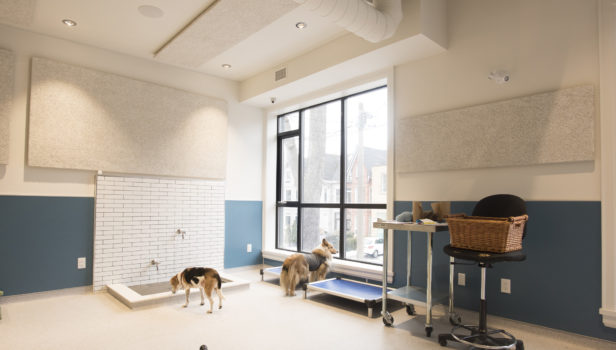 Animal Haus Daycare Boarding Queen West Animal Hospital